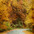 Stock Photo: Curving road in autumn forest