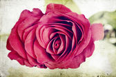 Vintage photo of red rose — Stock Photo