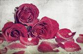 Foto de época de rosas rojas — Foto de Stock