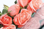 Pink rose covered with dew — Stock Photo
