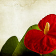 Red anthurium on vintage background — Stock Photo