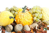 Autumn concept - Pumpkin and grapes on white — Stock Photo
