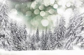 Christmas winter landscape — Stock Photo