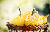 Vintage photo of pumpkins in basket — Stock Photo