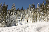 Skiers climbing to the top of the mountain — Stock Photo