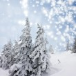 Christmas background with snowy fir trees — Stock Photo #34571651