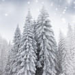 Christmas background with snowy fir trees — Stock Photo #34759247