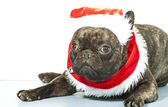 French bulldog dressed up for Santa Claus — Photo