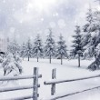 Winter landscape with snowy fir trees ad fence — Stock Photo #36841331