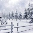 Stock Photo: Winter landscape with snowy fir trees ad fence