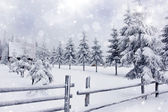 Winter landscape with snowy fir trees ad fence — Stock Photo