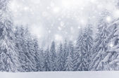 Christmas background with stars and snowy fir trees — Stock fotografie
