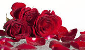 Red roses covered wit dew — Stock Photo