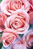 ροζ τριαντάφυλλα που απομονώνονται σε λευκό φόντο — Φωτογραφία Αρχείου