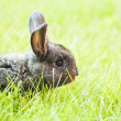 Rabit bunny in grass — Stock Photo #41450149