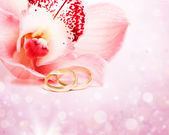 Orchid and wedding rings — Stock Photo