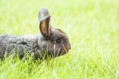 Rabit bunny in the grass — Stock Photo