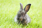 Rabbit baby in grass — Stock Photo