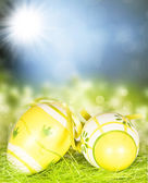 Easter eggs on green — Stock Photo