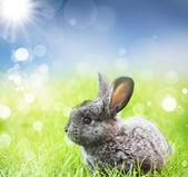 春の牧草地のウサギ — ストック写真