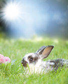 Bunny in meadow — Stock Photo
