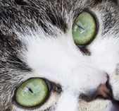 Close up on a cat's green eyes — Stock Photo