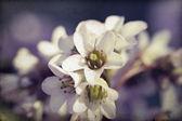 Antika arka plan bahar çiçeği — Stok fotoğraf
