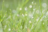 Spring background of grass with dew — Stock Photo