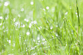 Green grass with water dew — Photo