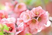 Spring bloom — Stock Photo