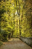 Curving road in autumn park — Stock Photo