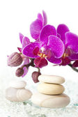 Spa stones and pink orchid — Stock Photo