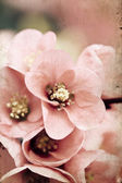 Pink flowers on vintage background — Stock Photo