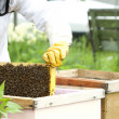 Beekeeper holding a frame of honeycomb — Stock Photo