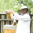 Working apiarist — Stock Photo #48697243