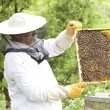 Working apiarist — Stock Photo #48697271