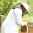 Working apiarist — Stock Photo #48697273