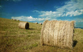 Hay-roll on field — Stock Photo