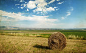Hay-roll on field after harvest — Stock Photo