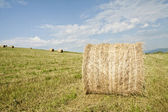 Hay-rolls on field — Stock Photo