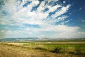 поле и голубое небо с облаками — Стоковое фото