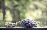 лаванда букет — Стоковое фото