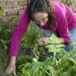 Stock Photo: Adult womworking her garden