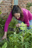Adult woman working her garden — Stock Photo