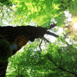 Beautiful tree with sun rays — Stock Photo #18772625