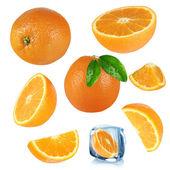 Oranges collection — Stock Photo
