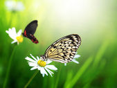 Exotic butterfly with daisy flower — Stock Photo