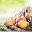 Colorful easter eggs — Stock Photo #21251313