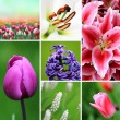 Flowers collection - Stock Photo