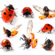 Collection of Seven-spot ladybirds — Stock Photo #24328455